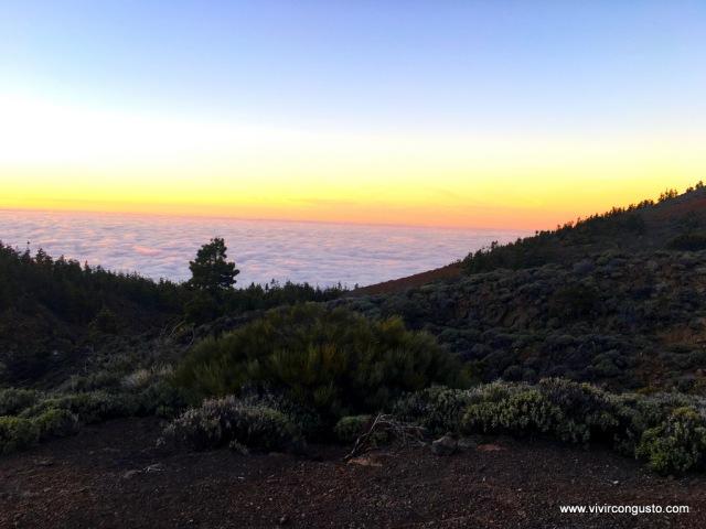 1603_26.Tenerife404 copia